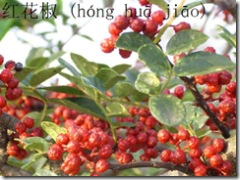 hong hua jiao; berries of the Chinese prickly ash